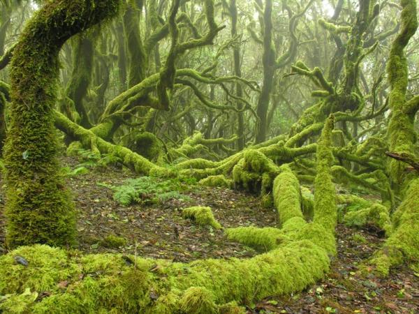 parque nacional de garajonay verd