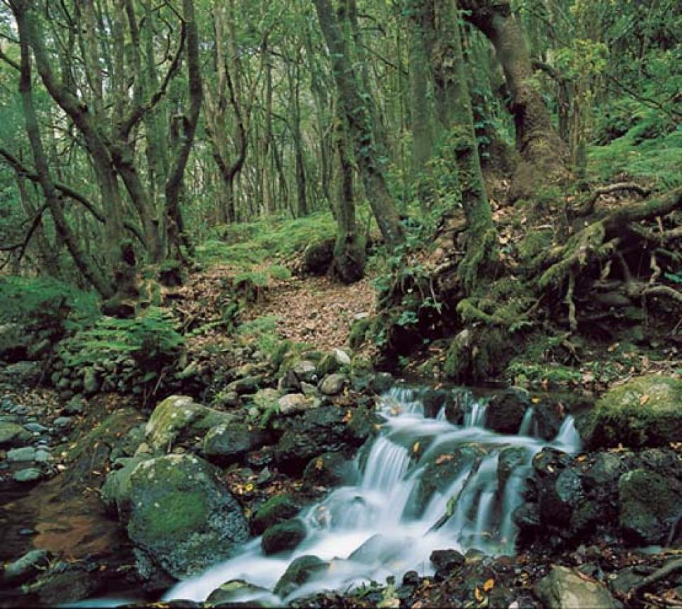 parque nacional de garajonay laurisilva riachuelo 3